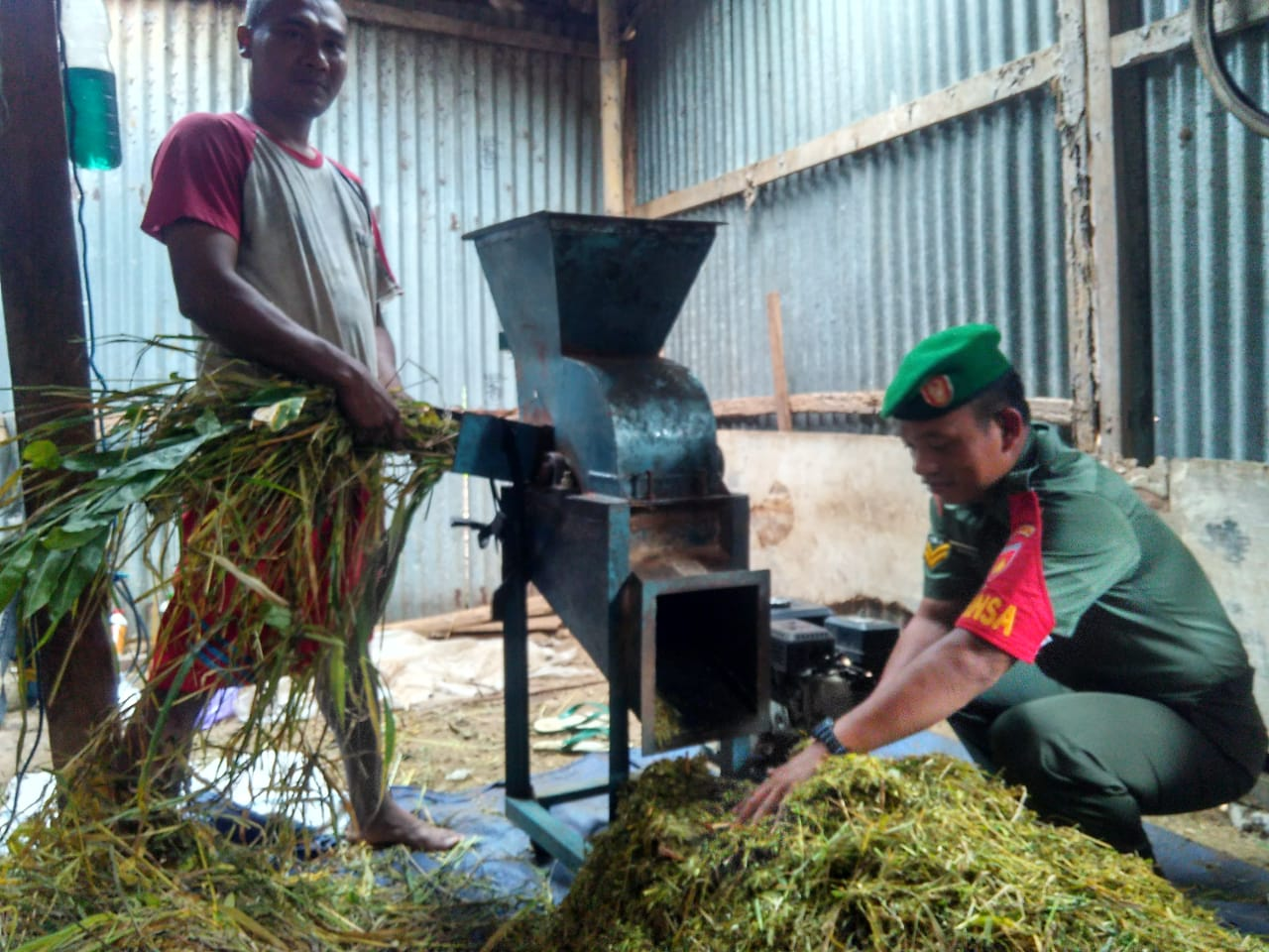 Monitoring Babinsa Dalam Pembuatan Pakan Ternak Fermentasi Brigade News